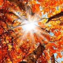 autumn2-1-1170x650.jpg